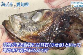 おうちで海ごはん 日本財団 海と日本PROJECT in 愛知県 2020 #02